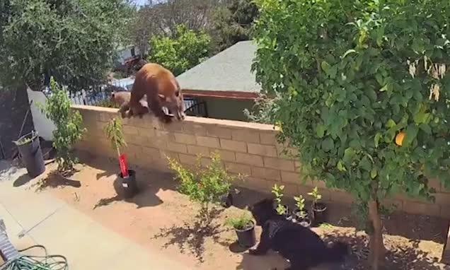 Nastolatka odepchnęła niedźwiedzia, żeby uratować psa